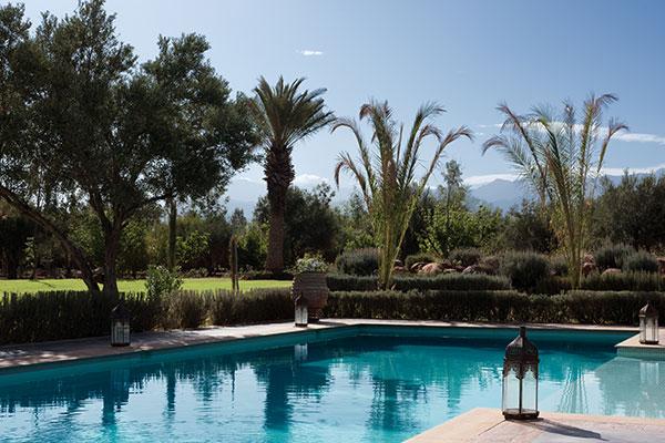 dar-zitouna-pool-palm-trees