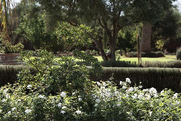 dar-zitouna-garden-bush