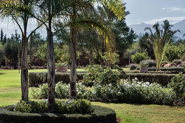 dar-zitouna-trees