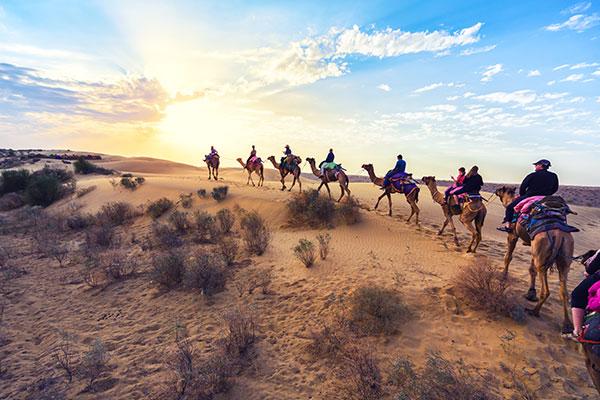 desert-camels-morocco
